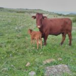 FOTO 3 (Carne Bolonia)